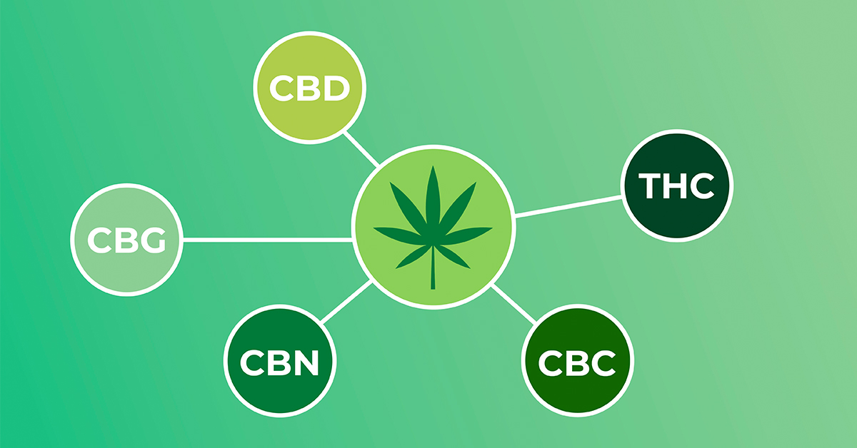 Introduction To The Primary Cannabinoids