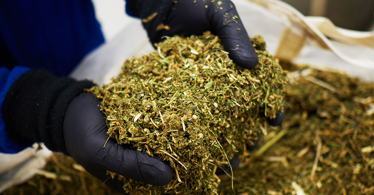 A Peek Into The Lazarus Naturals Extraction Process