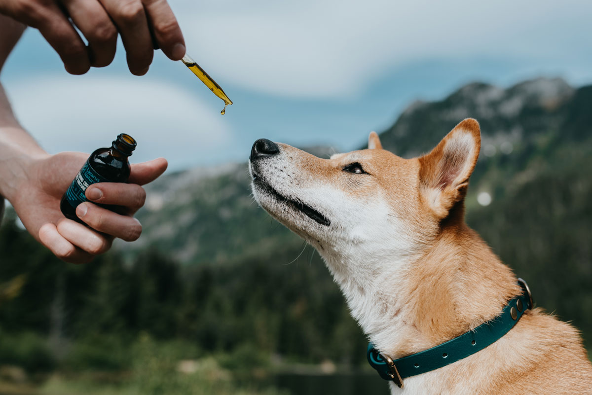 Dog Taking CBD